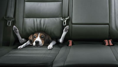 the-dog-is-stuck-in-the-middle-of-the-seat