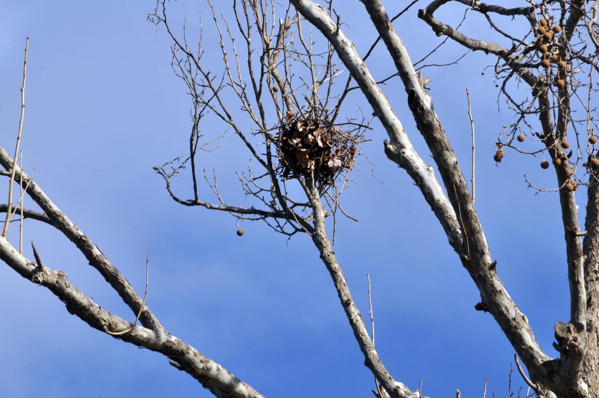 bird-nest-in-tree