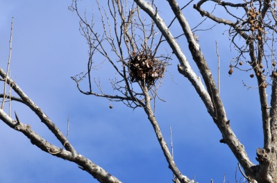 bird-nest-in-tree