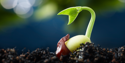 1600px-seed_germination